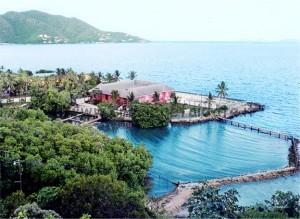 Tortola Dolphin Discovery